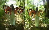 peacock  fairy wings
